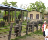 2 Nights 3 Days Chitwan Jungle Safari Package