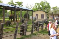 2 Nights 3 Days Chitwan Safari