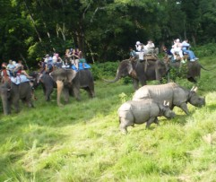 1 Night 2 days Chitwan Program